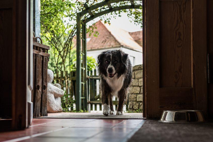 Die Erinnerung ist wie ein Hund, der sich hinlegt, wo er will (Cees Noteboom)